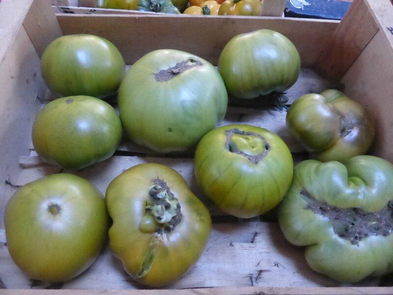 5-tomates (7)