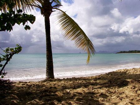 Paysage_de_Martinique
