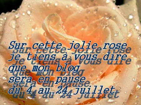 rose_annonce
