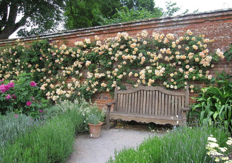 Le jardin anglais mottisfont abbey et sa roseraie album photos mon jardin de roses anciennes for Jardin 0 l4anglaise