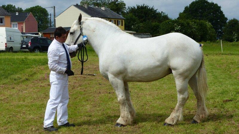 Vanille de Bernaville - 12 Juin 2016 - Concours d'élevage local - Bernaville - 3e ex-aequo (Suitées)