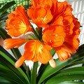 Fleur orange (connais pas son nom).