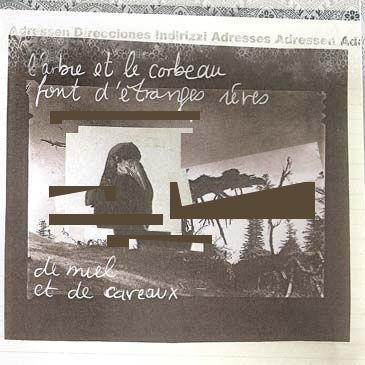 corbeau2