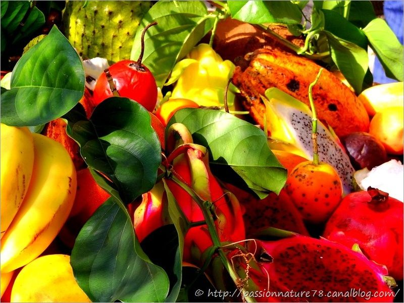 Fruits exotiques (3)