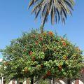dans le jardin de la mosquée d'Acre