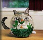 cat_fishbowl