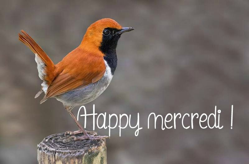 Happy Mercredi4