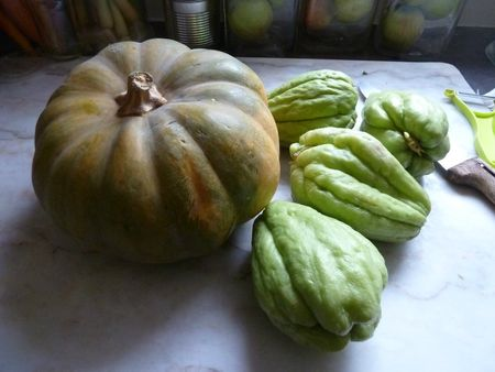 10-courge de provence et chayottes (3)
