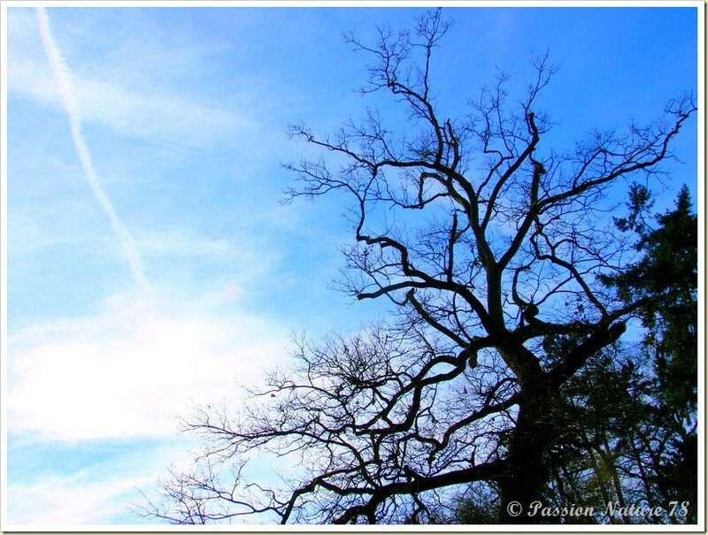 La forêt de Rambouillet vue sous un autre angle (3)