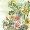 4- Chrysanthèmes en désordre mais belles0001