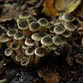 Faire différents spores (12)
