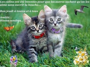 2 chatons bisous tendres