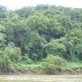 Sailing on the Usumacinta River to Yaxchilan - Jungle