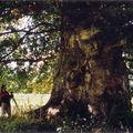 Le Chêne de la ferme de Socquentot, Belmesnil, juillet 2008 (avec Jérôme Hutin)