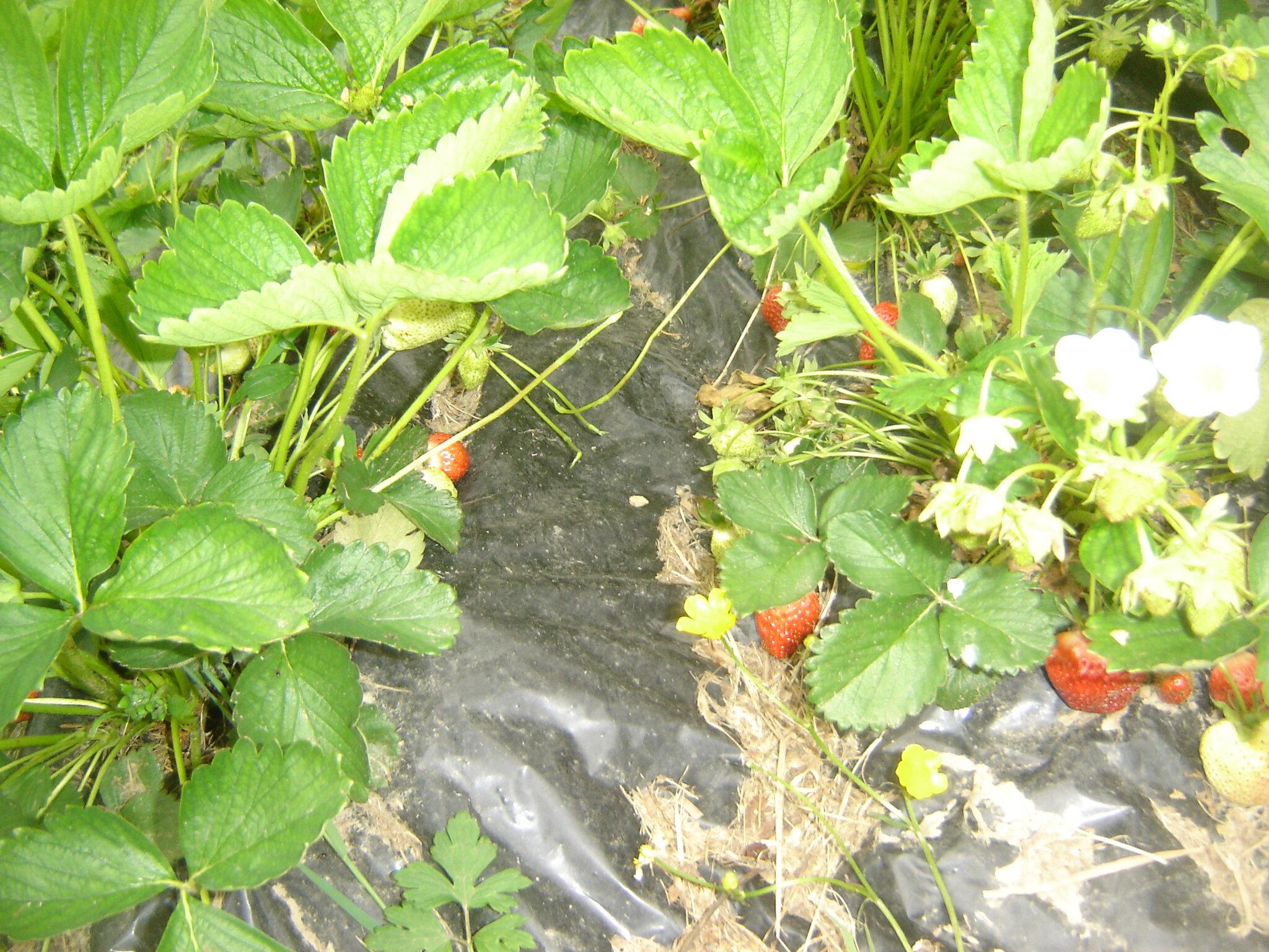 Petit tour au jardin potager qui prend forme le 18 for Au jardin potager