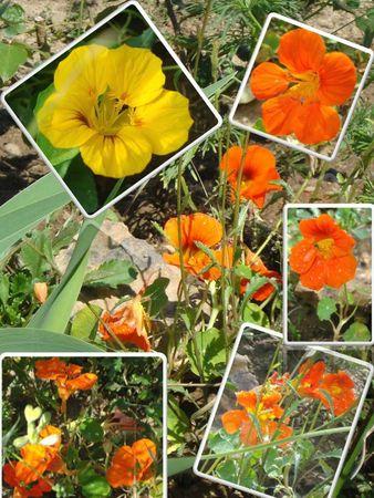 Fleurs 2009-2010 (6)