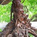 tronc sculpté