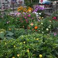 2009 08 08 La plus belle partie de mon jardin