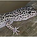 Bien-être : quel âge humain à votre animal (tortue/serpent/iguane...)