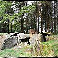 L'allée couverte de corn-er-houët (hoët), à caurel (22)