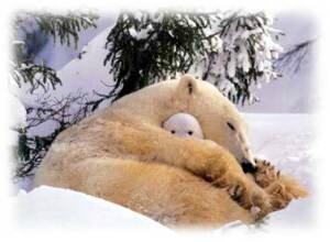 hibernation_maman_ours_et_son-petit