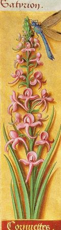 orchid_e_1