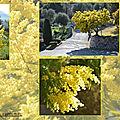 Publication du goodie de juin / laboratoire deva / sortir de son isolement et aller vers les autres / elixir floral : mimosa