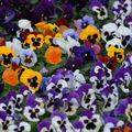 plantes en fête 0120010