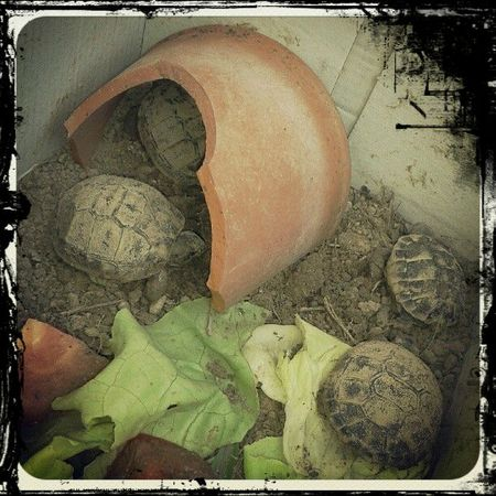 2012-09-09_bebes-tortues