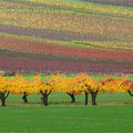 Lumire et couleurs d'automne