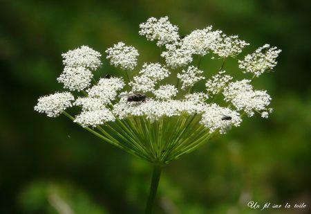 fleur_2