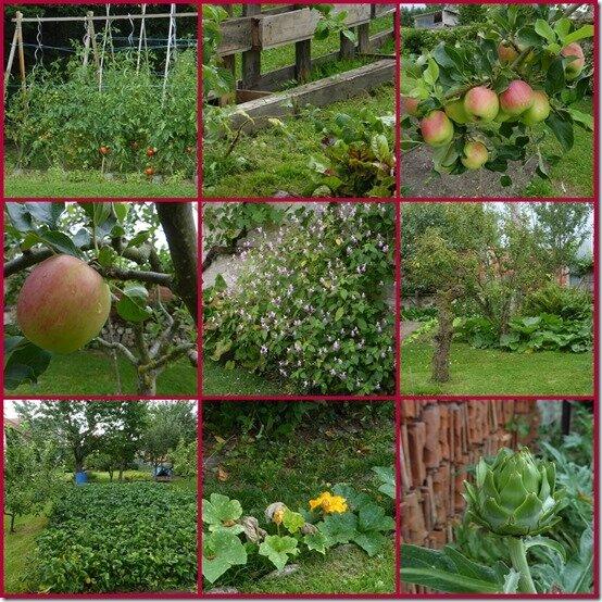 jardin 25 aout 20173