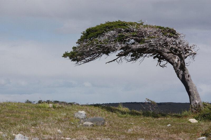arbre-dans-le-vent