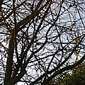 Branches...
