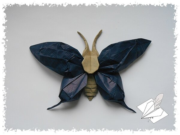 Papillon 008 blog