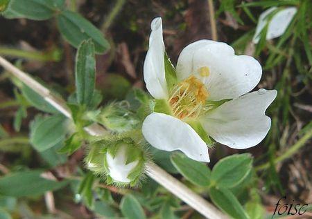 1 à 4 fleurs