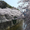 Edogawabashi Sakura 2009