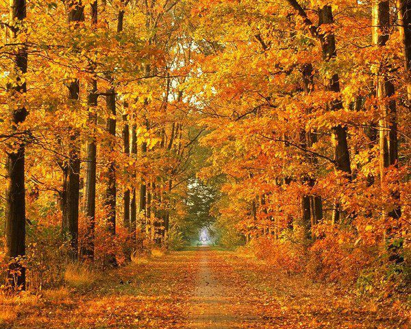 chemin d'automne FB_n
