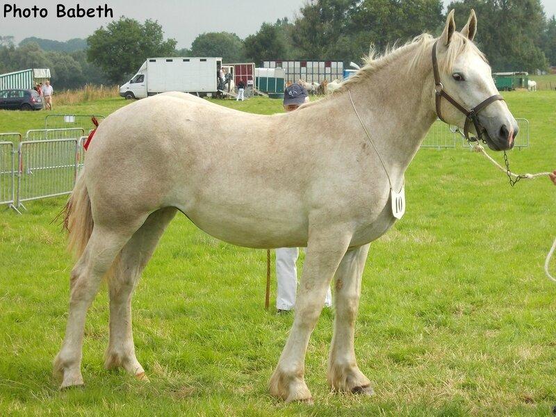 DALILA d'Avesnes - Concours National d'élevage - Samer (62) - 26 juillet 2014 - 3e (1 an)