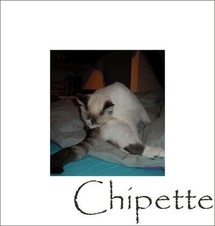 Chipette