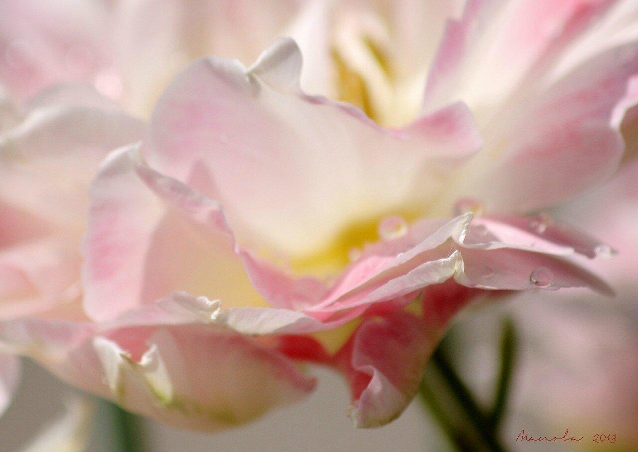 des fleurs ~~~~