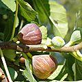 Tarte fine aux figues à la crème d'amandes