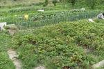 jardinblog1_800