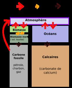 Carbone_flux2