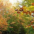Belles couleurs d'automne( suite)
