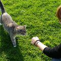 Melissa, Cat