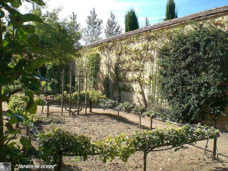 Glossaire du jardinier le jardinoscope cot pratique les bons gestes faire au jardin - Quand tailler les abricotiers ...