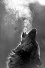 Plomodiern Loup 3a