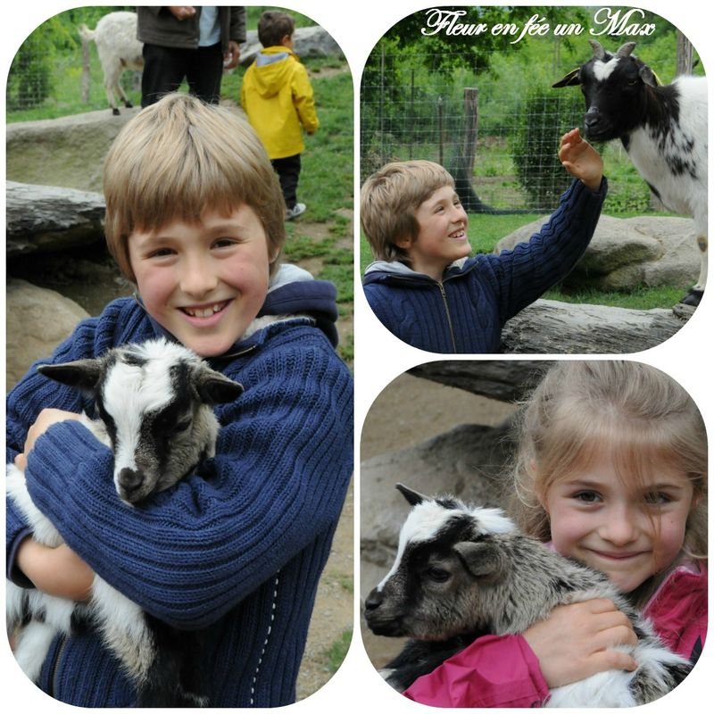 parc animalier7
