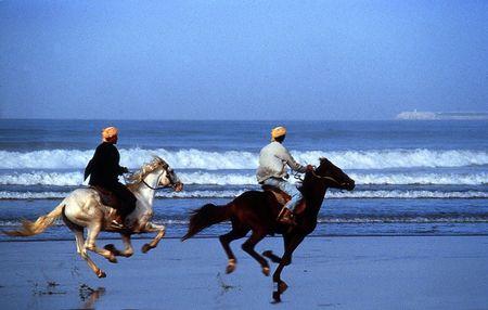 horses_agadir